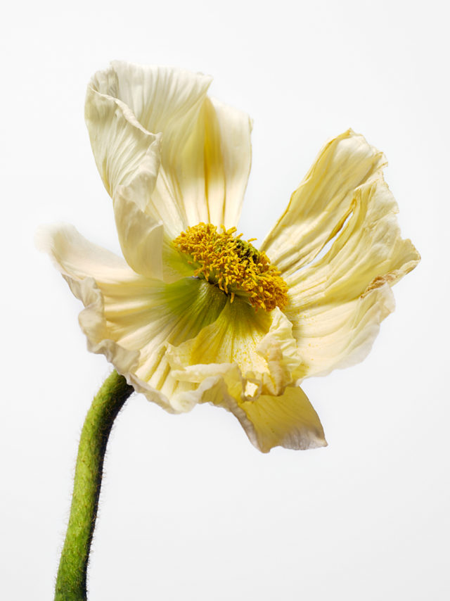 elstudio cecilia hallin johan hörnestam flower lernbergerstafsing